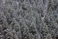 Bridger Teton National Forest Wyoming Fotos de archivo libres de regalías