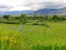 Bridgers und Blumen Lizenzfreie Stockbilder