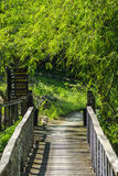 Bridges, bamboo, tropical rain forests,Thailand Royalty Free Stock Photo