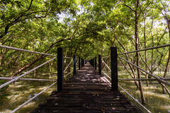 Bridges in the mangroves Royalty Free Stock Image