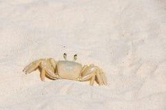 Bridgetown, Μπαρμπάντος - καβούρι άμμου στην παραλία Brownes - κόλπος της Καρλάιλ Στοκ Εικόνα