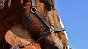 Bridle, Halter, Horse, Horse Tack Stock Photography