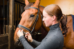 Bridle horse Royalty Free Stock Image