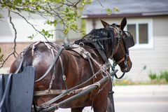 Bridled Horse by the Road. Tranquil image of a bridled horse waiting by the roadway connected to a carriage Royalty Free Stock Images