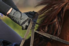 Bridles Royalty Free Stock Photography