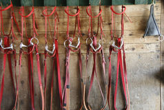 Bridles Stock Photo