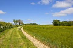 Bridleway和大麦领域 免版税库存照片