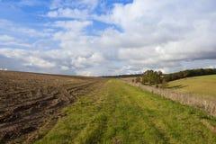Bridleway和森林地 免版税库存照片