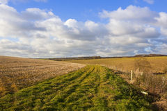 Bridleway and agriculture. A grassy bridleway with trees and hedgerows in a yorkshire wolds agricultural landscape with straw stubble and wheat crops in Royalty Free Stock Photography