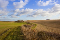 Bridleway in autumn. A grassy bridleway with trees and hedgerows in a yorkshire wolds agricultural landscape with straw stubble and wheat crops in undulating Stock Images