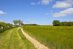 Bridleway and barley field. A ripening barley crop beside a country footpath and bridleway in the yorkshire wolds england under a blue sky in summer Royalty Free Stock Photos
