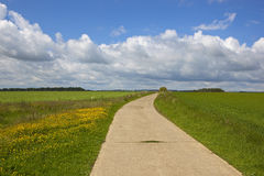 Bridleway with buttercups Royalty Free Stock Images