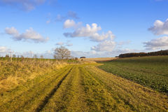 Bridleway and canola crop Stock Photo