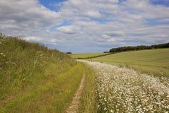 Bridleway con i wildflowers Fotografia Stock Libera da Diritti