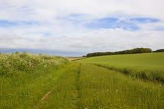 Bridleway con i wildflowers Fotografia Stock