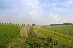 Bridleway with crops Stock Photo
