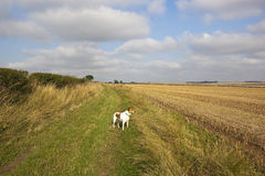 Bridleway and dog Royalty Free Stock Photography