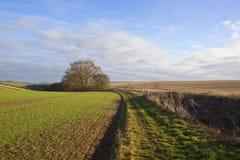 Bridleway e giacimento di grano Fotografia Stock