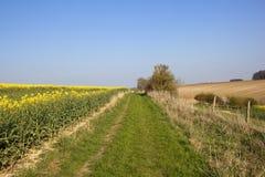 Bridleway e terreno coltivabile Immagini Stock Libere da Diritti