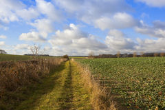 Bridleway ed agricoltura Immagine Stock