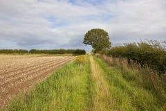 Bridleway ed il raccolto della patata Fotografie Stock