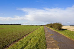 Bridleway and hedgerow. A concrete footpath in agricultural land with trees and hedgerows under a blue cloudy sky in the yorkshire wolds Stock Photography