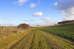 Bridleway na terra Imagem de Stock