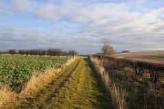 Bridleway nell'inverno Immagini Stock Libere da Diritti