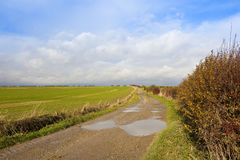 Bridleway with puddles Stock Photo