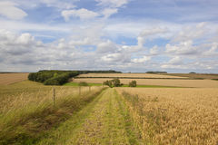 Bridleway rurale Fotografia Stock Libera da Diritti