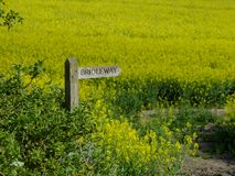 Bridleway sign with a background of rapeseed in full blossom royalty free stock images
