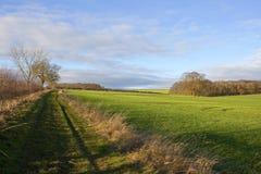 Bridleway und Weizen Stockfotografie