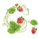 Brief een Aardbeidoopvont Rood Bes het van letters voorzien alfabet Vruchten ABC Royalty-vrije Stock Afbeeldingen