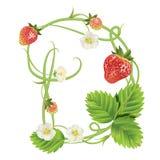 Brief een Aardbeidoopvont Rood Bes het van letters voorzien alfabet Vruchten ABC Royalty-vrije Stock Foto
