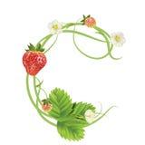 Brief een Aardbeidoopvont Rood Bes het van letters voorzien alfabet Vruchten ABC Royalty-vrije Stock Fotografie