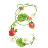 Brief een Aardbeidoopvont Rood Bes het van letters voorzien alfabet Vruchten ABC Royalty-vrije Stock Foto's