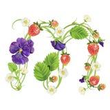 Brief een Aardbeidoopvont Rood Bes het van letters voorzien alfabet Vruchten ABC Stock Foto's