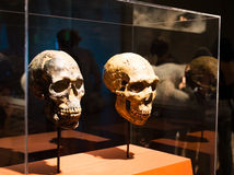 Brief History of Humankind exhibition in Israel Museum Royalty Free Stock Image
