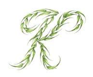 Brief K, alfabet van groene die bladeren op witte achtergrond wordt geïsoleerd stock illustratie