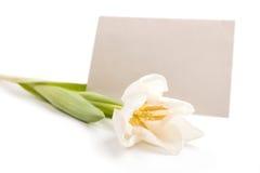 Brief met bloem stock foto's