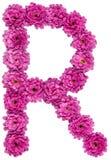 Brief R, alfabet van bloemen van chrysant, dat op wh wordt geïsoleerd stock afbeeldingen