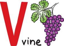 Brief V - wijnstok royalty-vrije illustratie