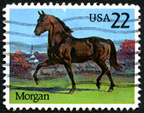 Briefmarke Morgan Horses USA Lizenzfreie Stockfotografie
