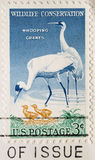 Briefmarke-Whooping Kräne Stockfotos