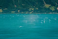 Brienzersee,烟特勒根瑞士 免版税图库摄影