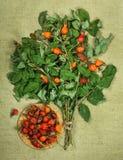 Brier, eglantine, wild rose. Dried herbs. Herbal medicine, phyto. Brier, eglantine, wild rose. Dried herbs for use in alternative medicine, spa, herbal cosmetics Royalty Free Stock Photos
