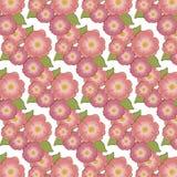 Brier kwiatu tło ilustracja wektor