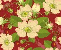 brier kwiaty ilustracji