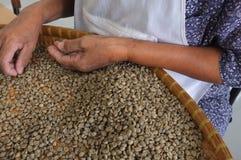 Brieten THAILÄNDISCHE Kaffeebohnen des Konzeptes, Hintergrundbeschaffenheit, die Kaffeebohne für das Licht, das gebraten wurde, M Lizenzfreies Stockfoto