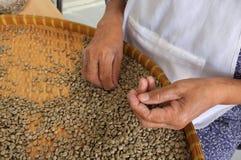 Brieten THAILÄNDISCHE Kaffeebohnen des Konzeptes, Hintergrundbeschaffenheit, die Kaffeebohne für das Licht, das gebraten wurde, M Stockbilder
